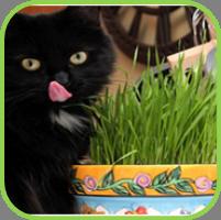 Cat_grass_thumb