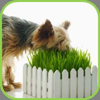 Dog_grass_thumb