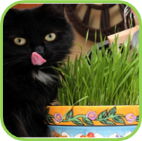 Cat_grass_thumb
