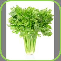 Celery_thumb