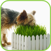 Dog_grass_thumb